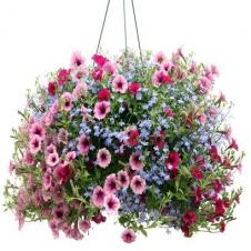 Hanging Basket donation request 2018